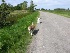 Ferienhaus Princesa Urlaub mit Hund an der Nordsee